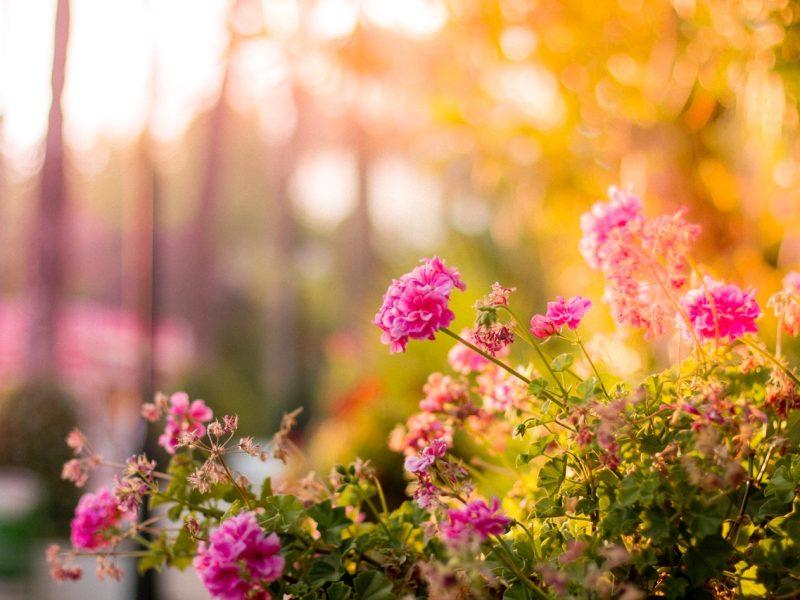 Jak zaaranżować ogród w stylu boho?