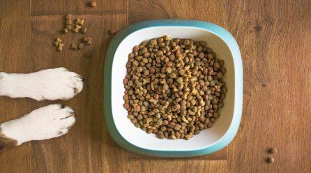 Jakie składniki powinny znaleźć się w karmie dla psa?