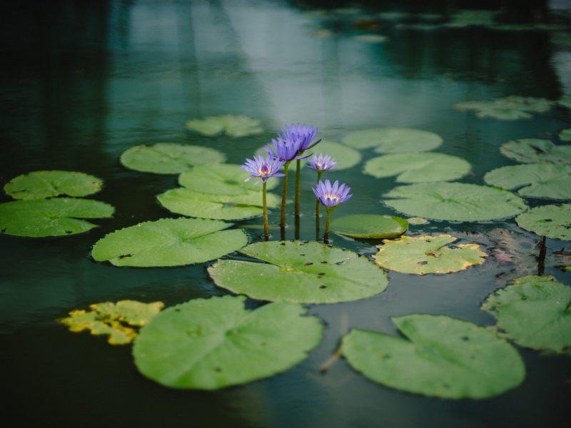 Oczko wodne w ogrodzie – porady