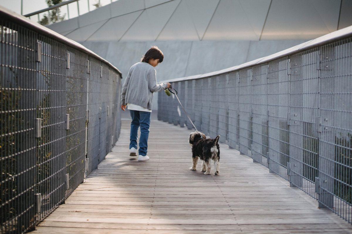 Smycz dla psa – jak wybrać najlepszą?