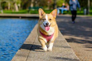 Jak rozpoznać agresję u psa? – kurs online dla właścicieli czworonogów
