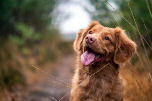 Jak oduczyć psa gryzienia rzeczy?