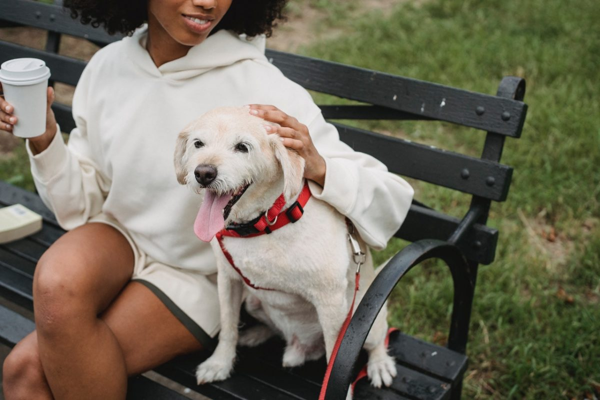 Jak dobrać odpowiedni model szelek i obroży dla psa?