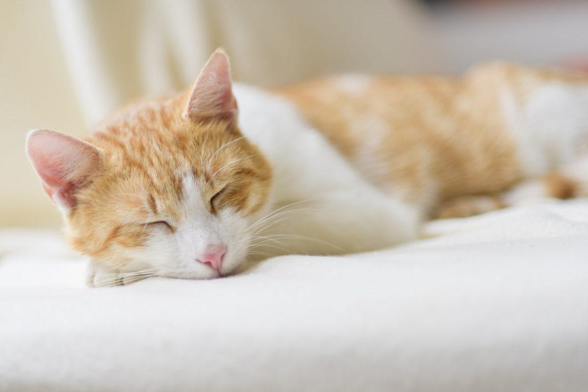 Zabawki dla kota – jakie wybrać dla swojego pupila?