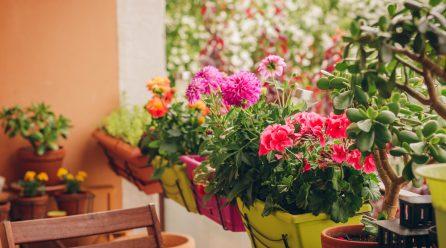 Szukasz inspiracji na aranżację balkonu? Oto najpiękniejsze kwiaty balkonowe