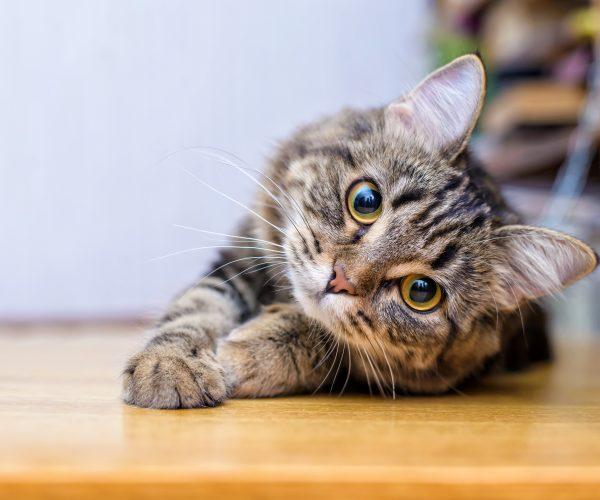 Jak wybrać imię dla kota?
