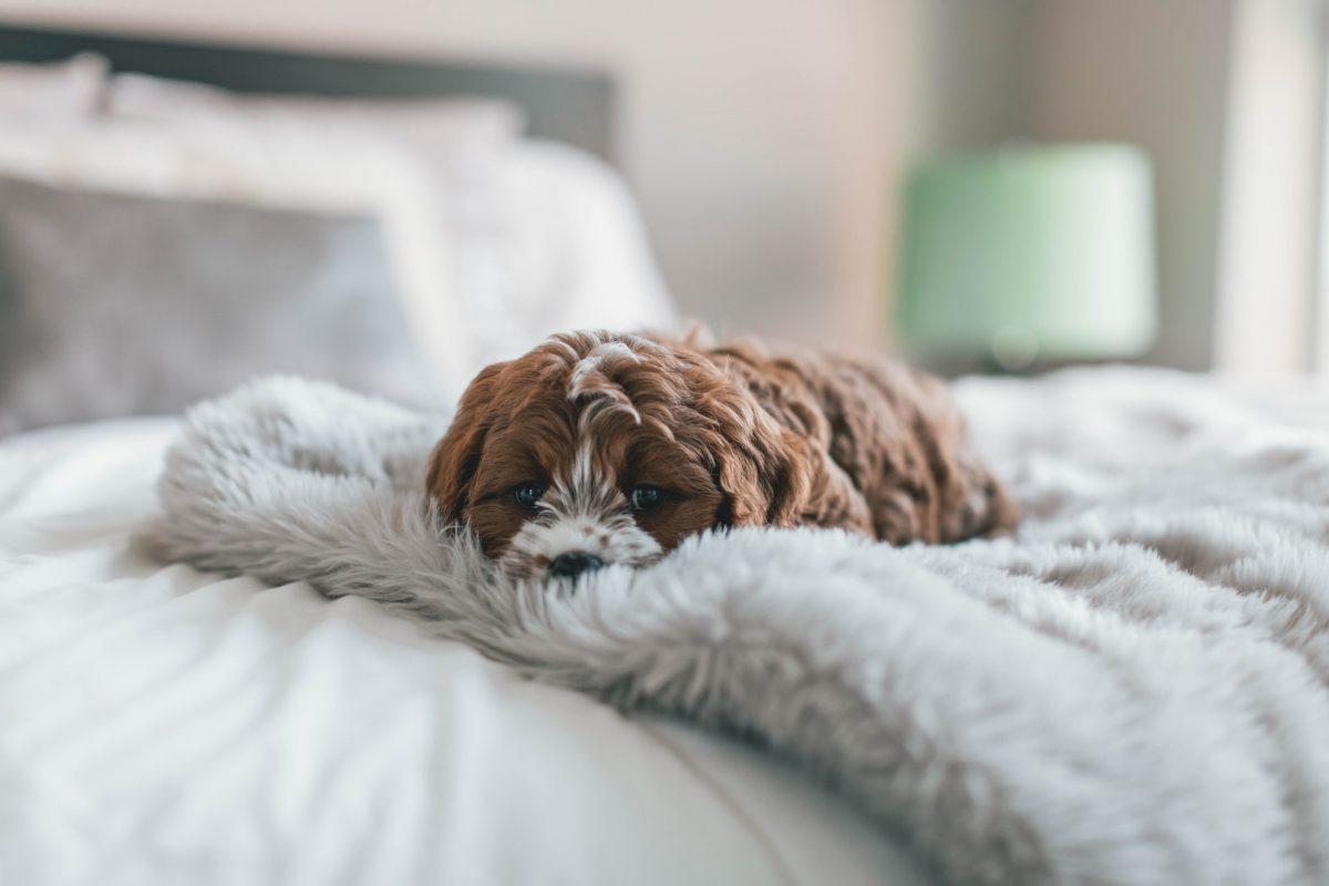 Co zrobić, gdy pies lub kot jest ospały?