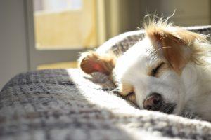 Objawy alergii pokarmowej u psa
