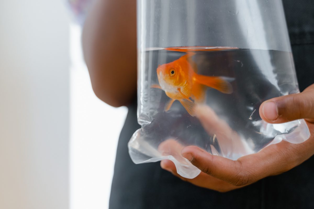 Jakie rybki wybrać do pierwszego akwarium?