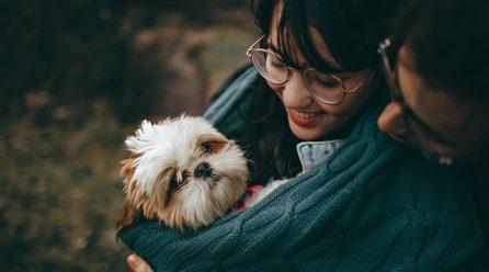 Jak pomóc psu zaaklimatyzować się w domu?